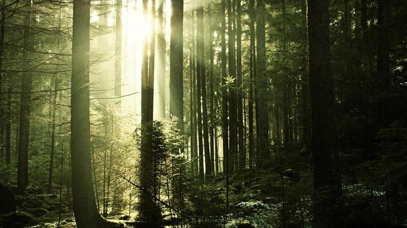 Wälder: Der Schweizer Wald siecht nicht, sondern wächst