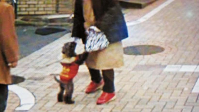 Ein Hund in Tokio