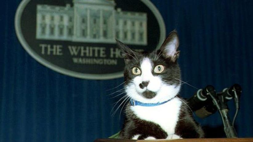 Socks, Hauskatze im Weißen Haus, bei einer Pressekonferenz