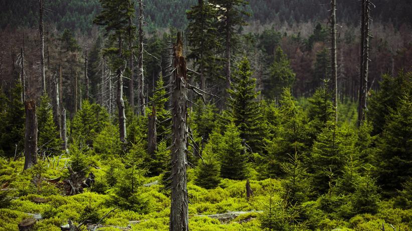 Harz: Bis heute Grenzregion: Der Harz ist immer noch aufgeteilt in Ost und West