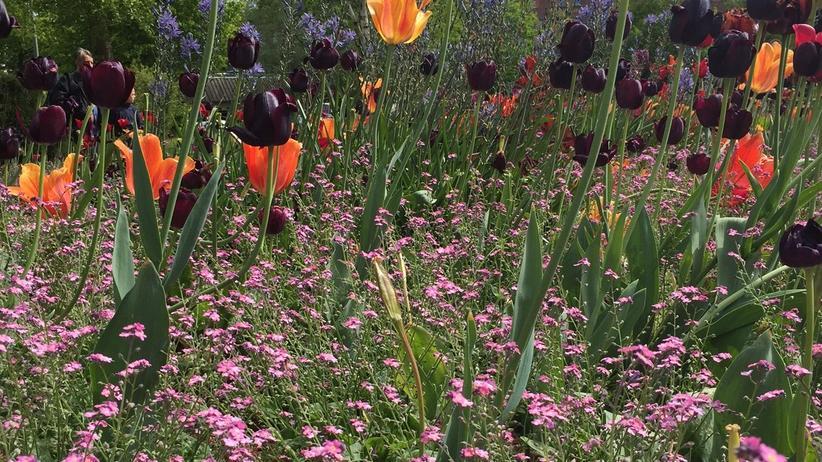 Bunte Tulpen trotzen dem Grau