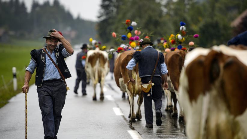 Ein Bauer mit Kühen beim traditionellen Alpabzug in der Nähe von Charmey.
