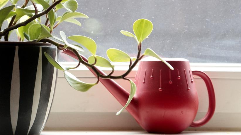 Pflanze mit Gießkanne