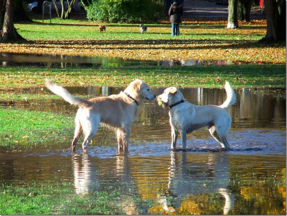 »Wollen wir was anstellen?« Gesehen im Alstervorland nach starkem Regen und ohne Anleinpflicht. Und, nein: Kampfhunde sind das auch nicht ...