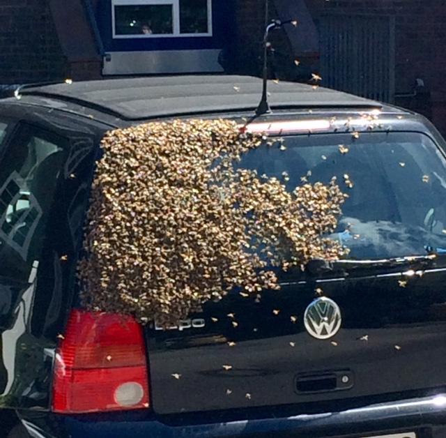 Bienenzucht auf Hausdächern ist in Hamburg ja mittlerweile fast alltäglich. Hier aber kommt die erste mobile Imkerei.