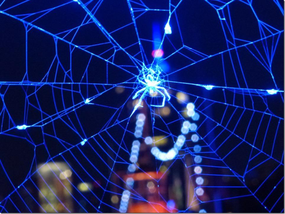 Fotografiert beim Blue Port an der Überseebrücke. Auch Spinnen machen mal blau.
