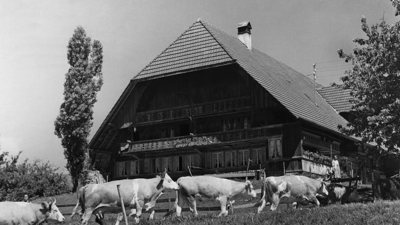 Kühe vor einem Farmhaus in der Schweiz, aufgenommen ca. 1955