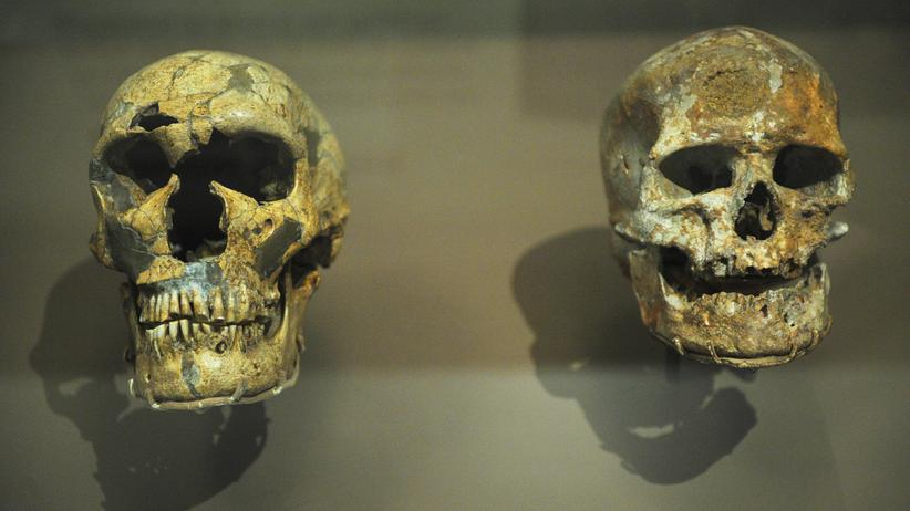 Neandertaler: Der Pionier war eher hier