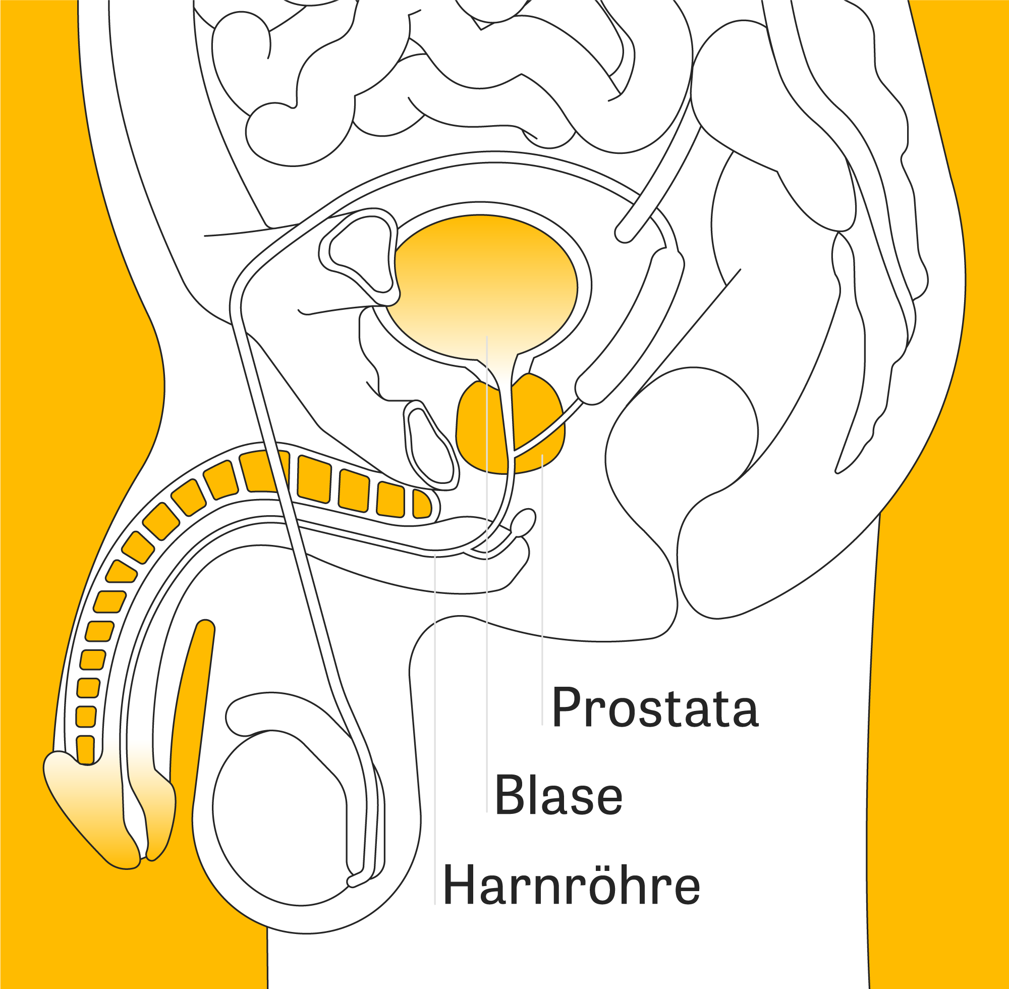 ejakulation durch druck auf prostata