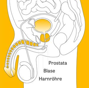 wie melke ich meine prostata