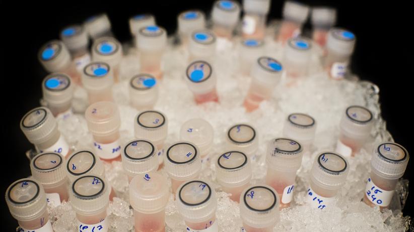 Krankheiten: Gekühlte Reagenzgläschen im Cancer Research UK, der weltweit führenden Krebs-Wohltätigkeitsorganisation
