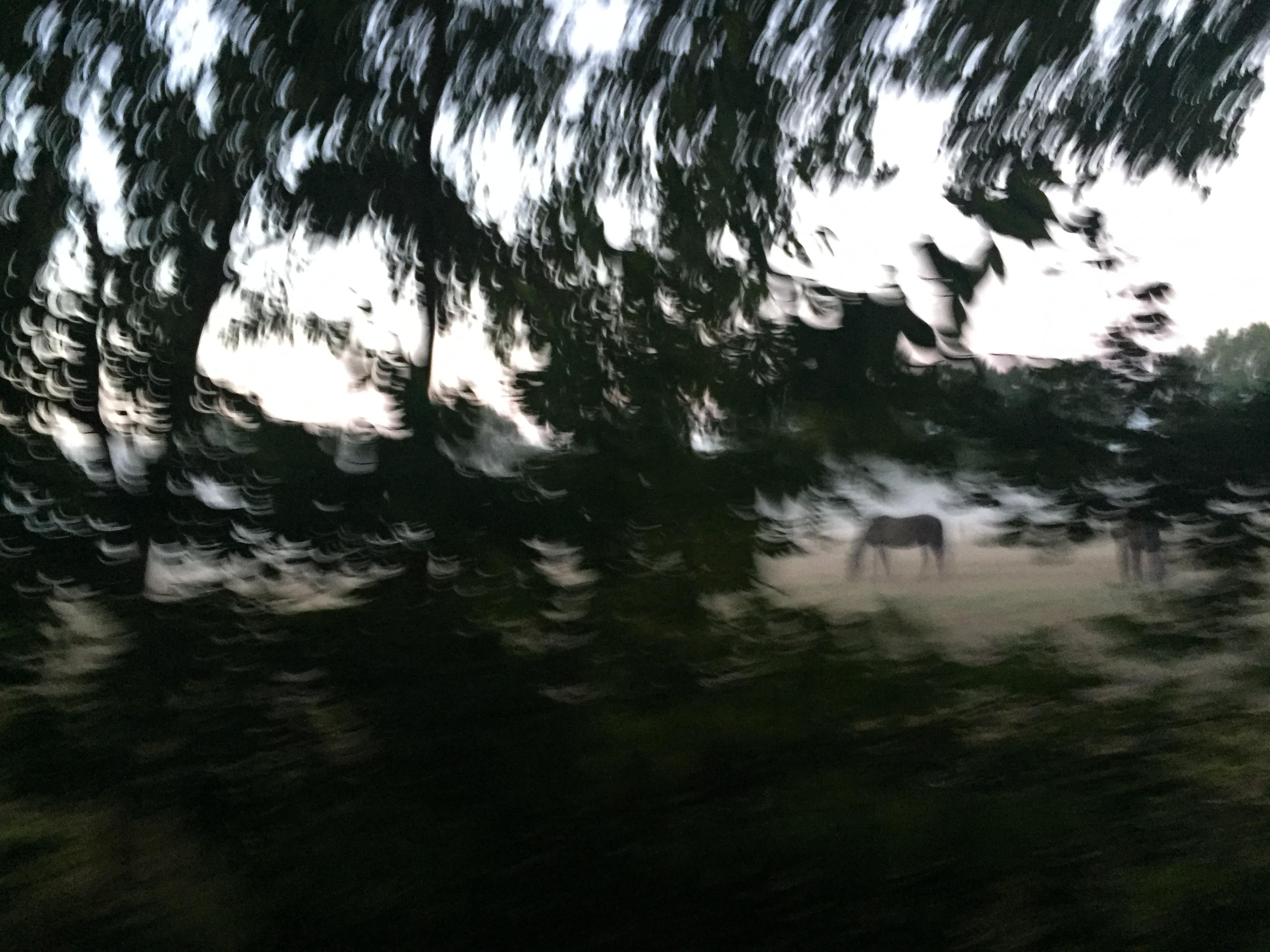 Neuer Stoff für die Fahrraddebatte: Höchst kriminell und sehr poetisch, ein Pferd im Morgennebel, aufgenommen beim Fahrradfahren.