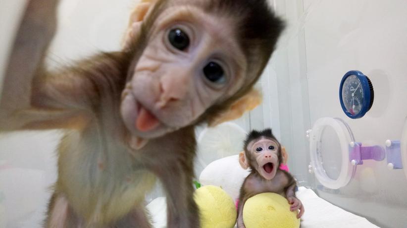Tierversuche: Das Königreich der Tierversuche