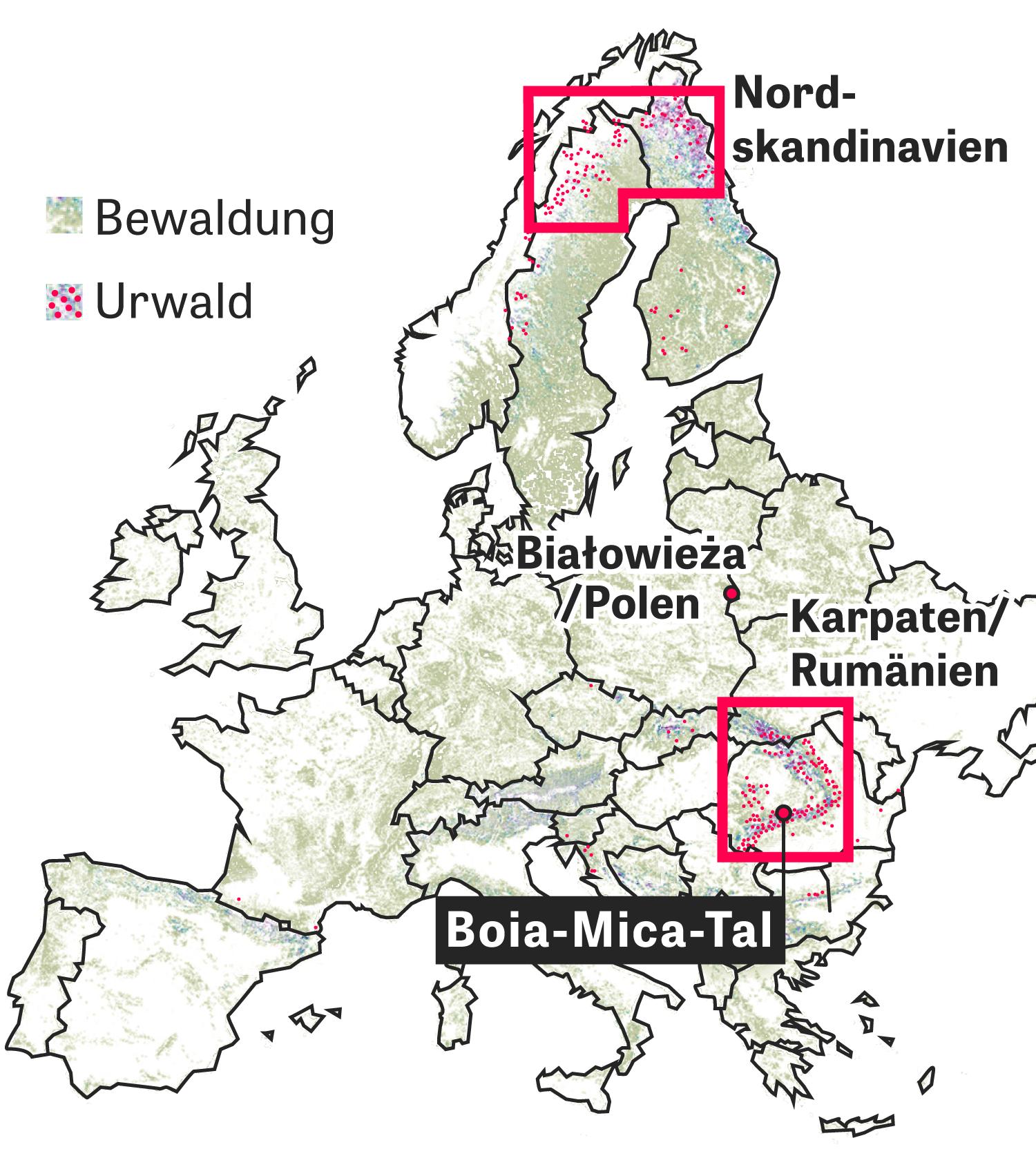 Europas letzte große Urwälder