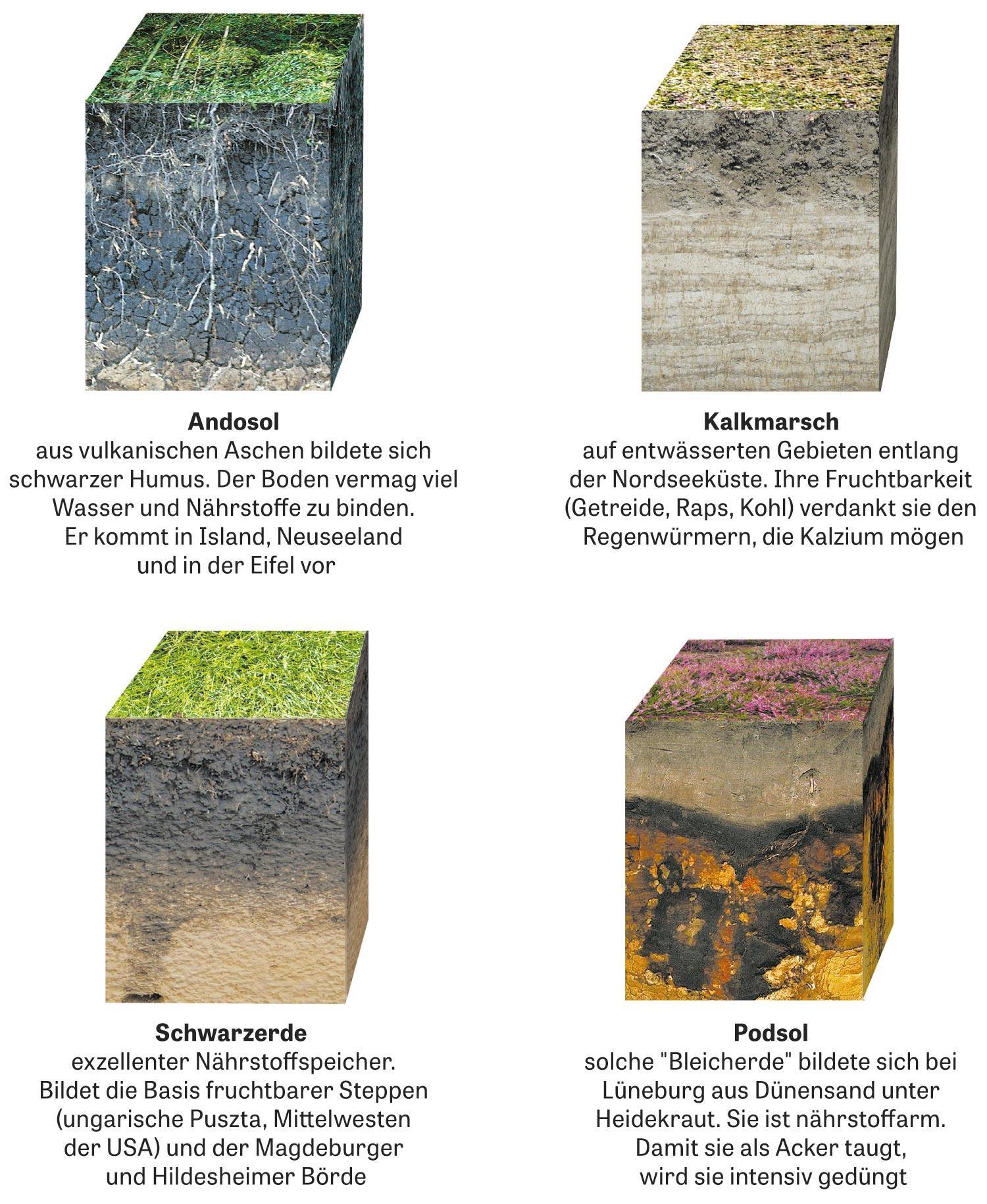 Erdboden: Gestein, Feuchtigkeit, Lebewesen: Unzählige Faktoren sorgen dafür, dass rein mineralisches Material in Jahrtausenden zu unterschiedlichen Bodenarten wird. Eine kleine Auswahl