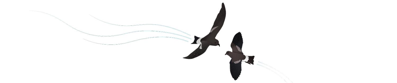 """Antarktis Station """"Neumayer III"""": Im Sommer besuchen Buntfuß-Sturmseeschwalben die Station und spielen in der Luftströmung darunter."""