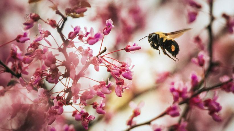 Insektensterben: Wenn es nicht mehr summt