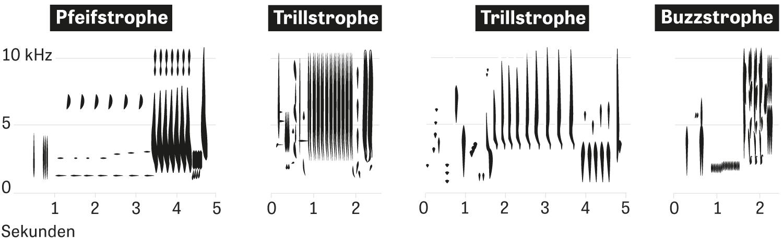 Um den Gesang der Nachtigall zu analysieren, arbeiten Forscher mit Spektrogrammen. Die zeigen die Tonhöhe des Gesangs und den zeitlichen Verlauf. Typisch sind längere Pfeifstrophen, komplexe Trillstrophen sowie tiefere, schnarrende Buzzstrophen.