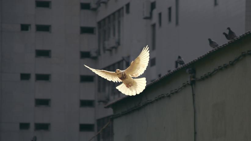 Katholische Akademien: Freiheit, die wehtut