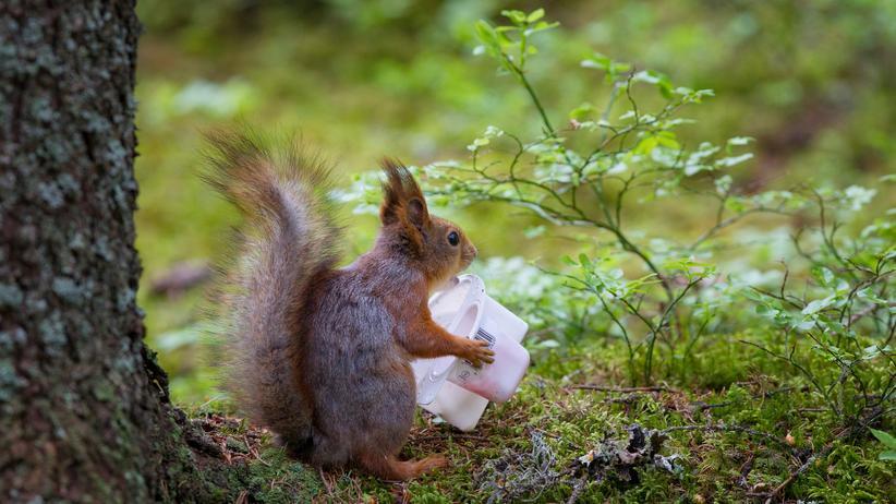 Klimaschutz: Plastikmüll im Wald