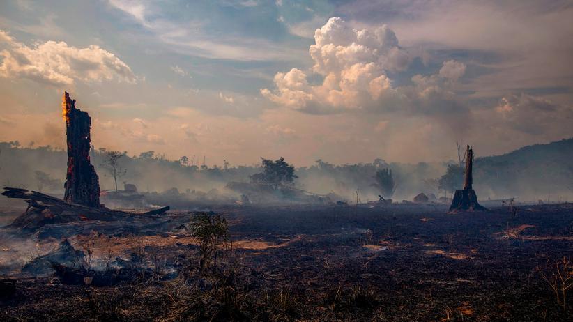 Waldbrände in Brasilien: Europa muss seine Macht stärker einsetzen