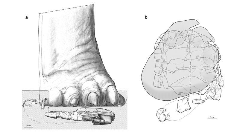 Paläontologie: Neulich auf dem Dino-Highway