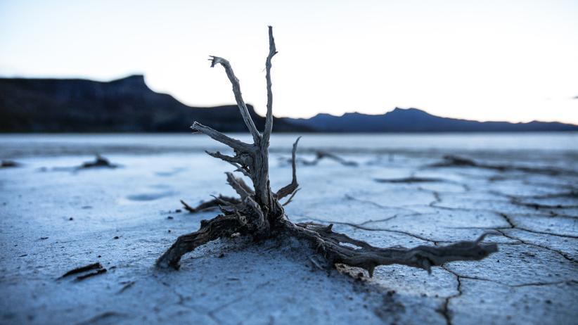 """Apokalypse: """"Die Kritiker versuchen, die Klimabewegung als irrational und hysterisch hinzustellen"""", sagt der Historiker Frank Biess."""
