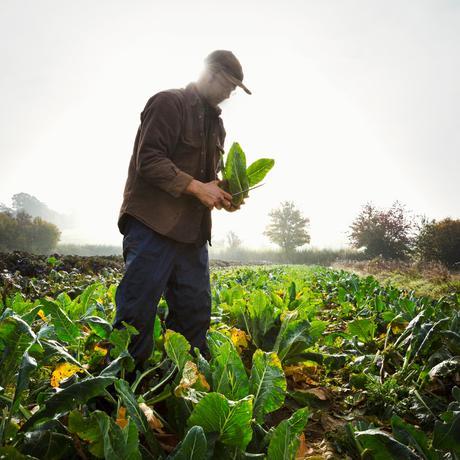 Gemüse anbauen: 48 Quadratmeter Stress