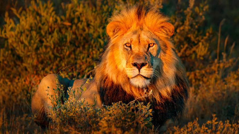 Auf Safari mit der ZEIT