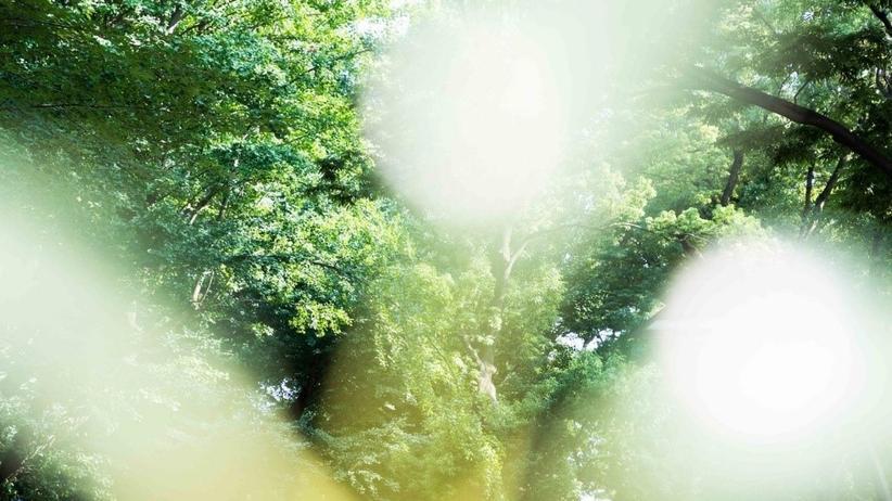 DISCOVER: Achtsamkeit: Das Leben im Hier und Jetzt