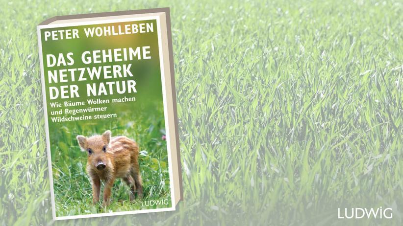 Peter Wohlleben: Deutschlands bekanntester Förster lässt uns wieder staunen