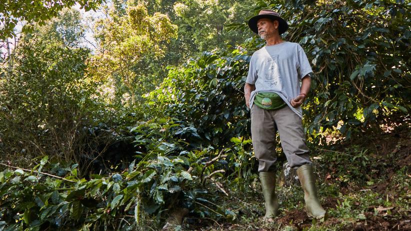 Kaffee aus Indonesien – mit Kooperativen gegen den Klimawandel