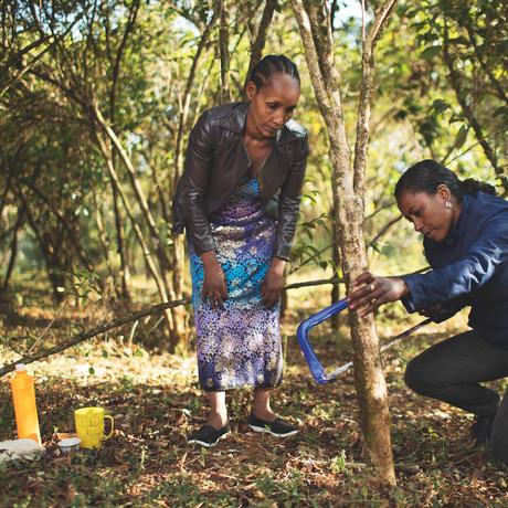 Nachhaltige Qualität – in den Kaffeefeldern Südäthiopiens