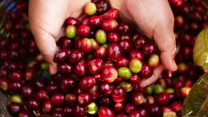 Kaffeequalität – von sensiblen Pflanzen und großen Reisen
