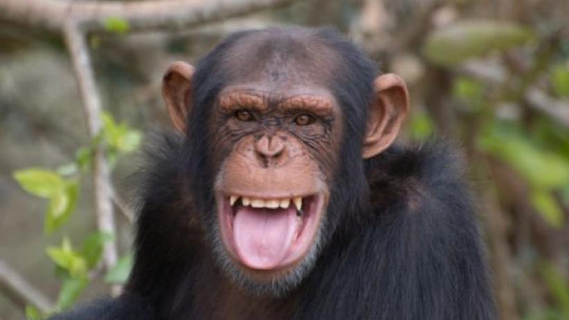 Richtig daten - was wir von den Schimpansen lernen können