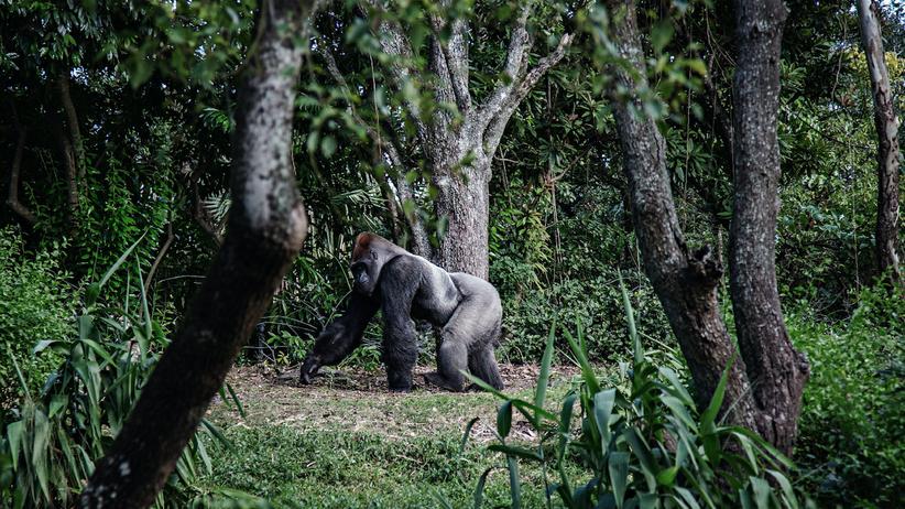 Abenteuer erleben: Ruanda