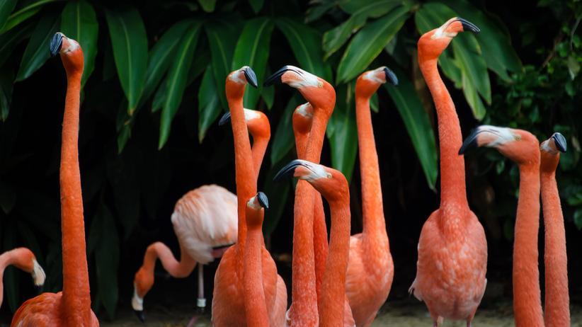 Testbirds: Die 250.000-Testvogel-Fabrik