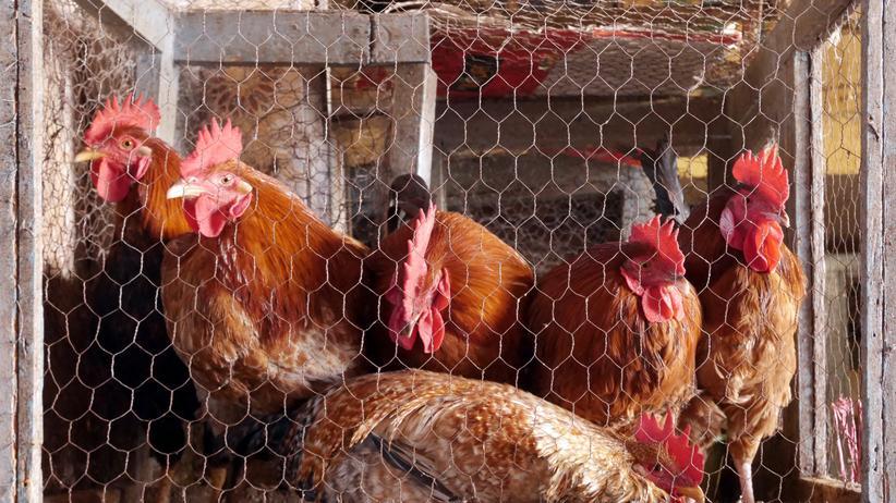Tierquälerei: Warum wird Tierquälerei so selten bestraft?