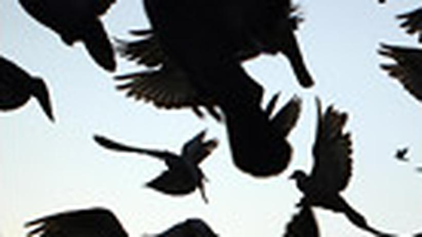 Krisen: Der Frieden ist wild
