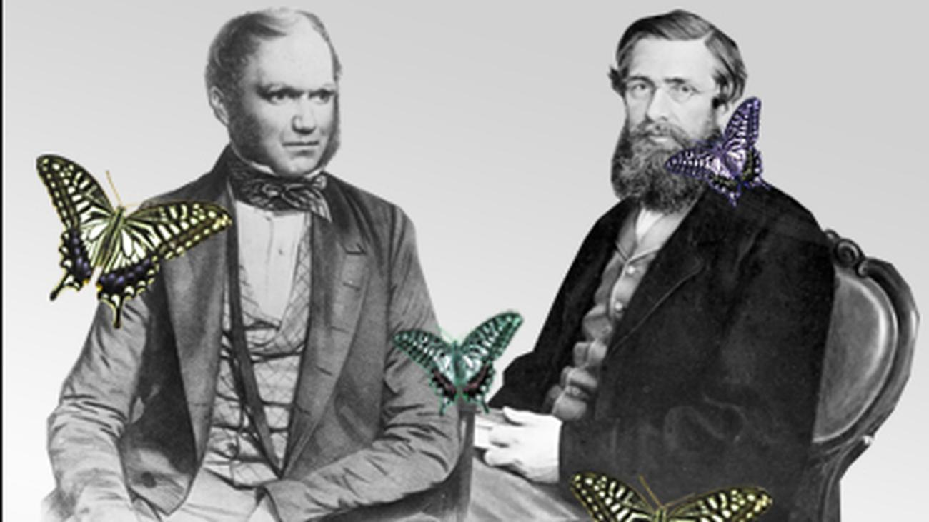 Partnersuche evolution