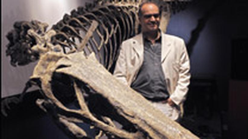 Raptor Argentinien Dinosaurier Austroraptor cabazai