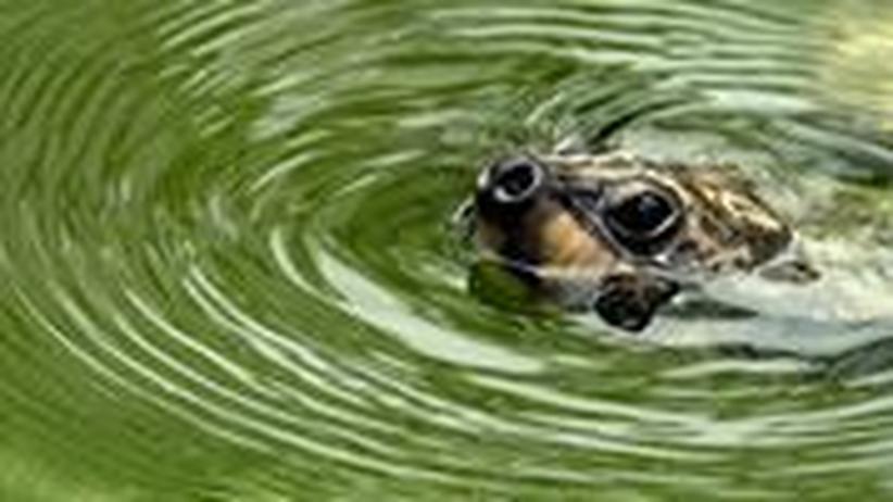 Die Artenvielfalt ist in Gefahr