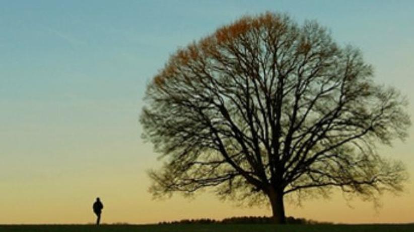 Wege aus der Krise: Ein Baum im Winter. Blüht er, achtet er nicht auf Effizienz - das könnte uns zum Vorbild dienen