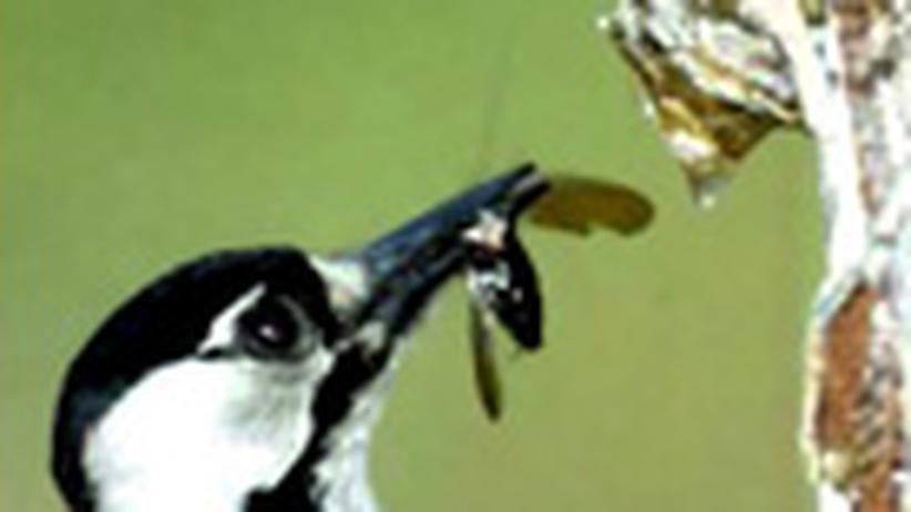 Artenschutz: Die Specht-Aktie