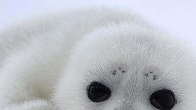 Leben am Nordpol: Ein Traum in Eis
