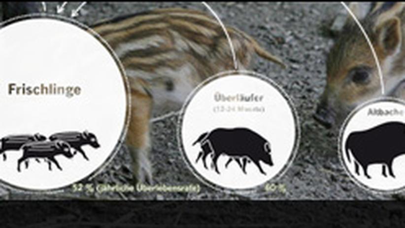 Wildschwein  Bestand