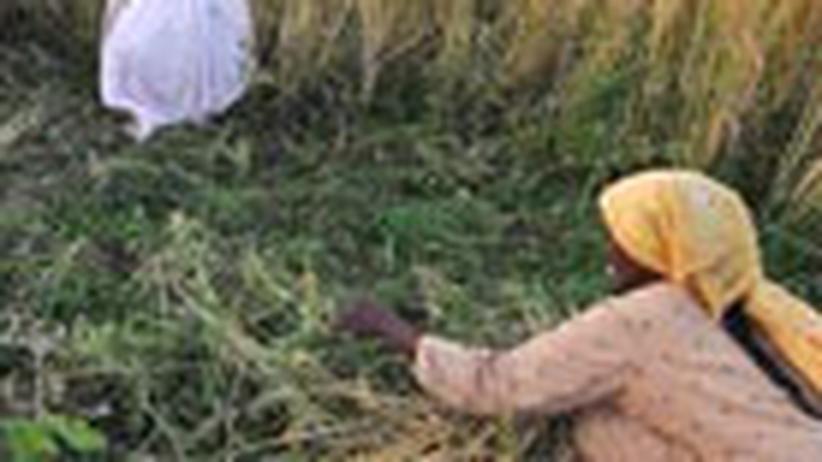 Nahrungskrise: Warnung vor Hungersnot
