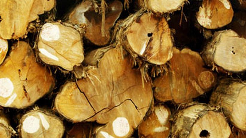 Technik im Alltag: Holz für das gute Gewissen