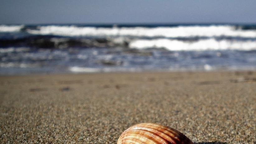 Kohlendioxid in der Umwelt: Saure Meere bedrohen Muscheln und Korallen