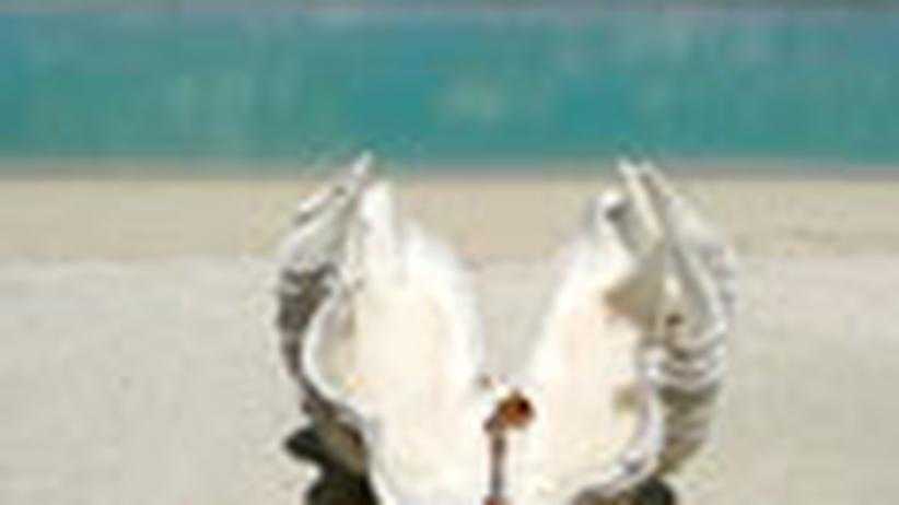 Cook-Inseln: Kia Orana - Willkommen in der Südsee